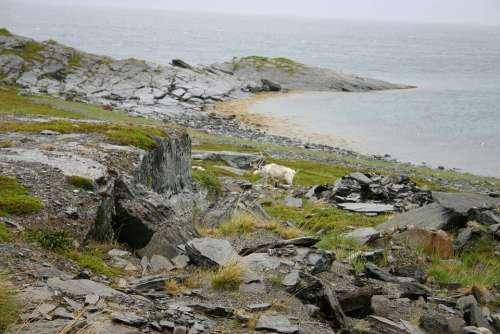 Norway Nature Reindeer Rocks North Of Norway North