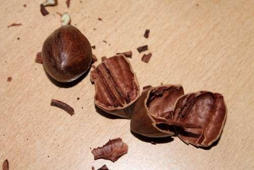Nutshell Nuts Nutshells Pecan