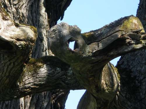 Oak Tree Face Hantu Ghost Mythical Creatures Eye