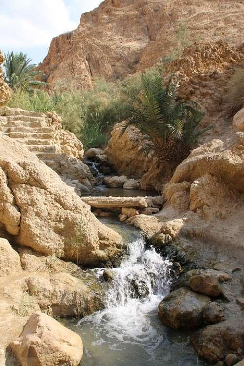 Oasis Tunis Africa Sahara Vacation Paradise