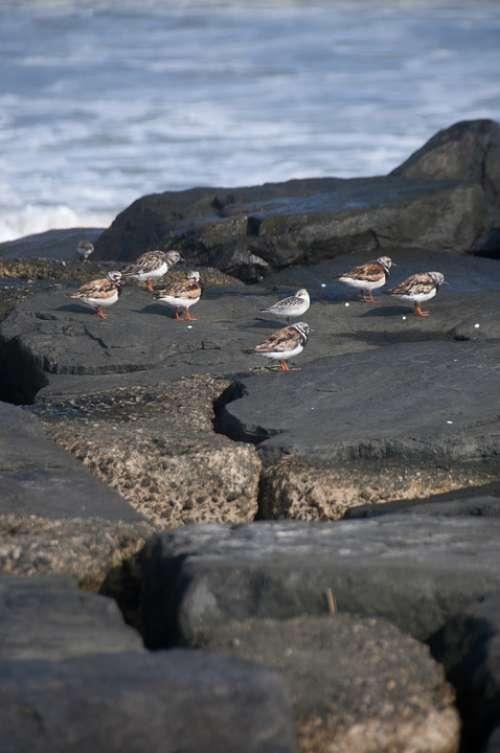 Ocean Rocks Birds Sea Summer Nature