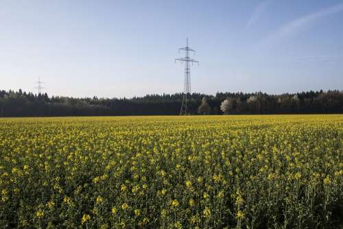 Oilseed Rape Agricultural Operation Yellow Field