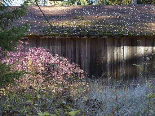 Old Wooden Shed Moss Covered Roof Ancient Season