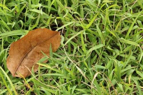 One Dry Leaf Dry Leaf Brown Leaf Grass Green Grass