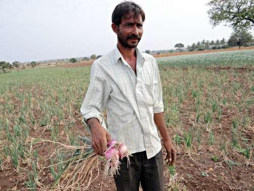 Onions Farmer Farm Field Crop India