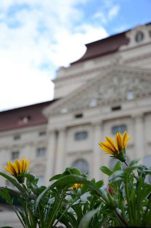 Opera Graz Flower Yellow Blossom Bloom City