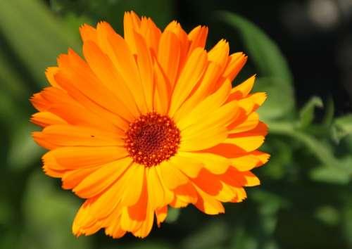Orange Color Flower Sun Garden Blossom Bloom