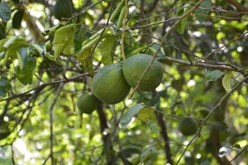 Orange Green Fruit Nature