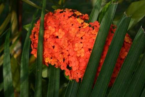 Orange Flower Hydrangea Green Leaves Hidden