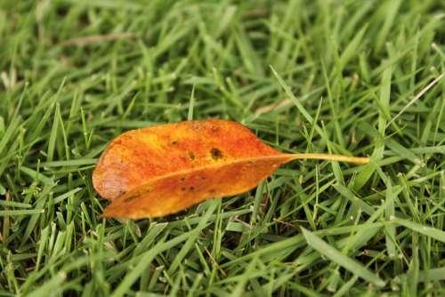 Orange Leaf One Leaf Autumn Fall Grass