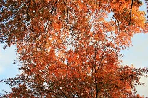 Orange Leaves Tree Leaves Foliage Orange Bright