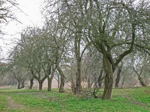 Orchard November Haunting Apple Tree