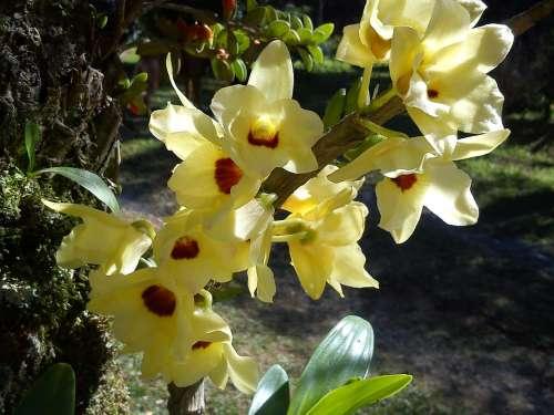 Orchid Flower Yellow Flowers Garden Orquidea