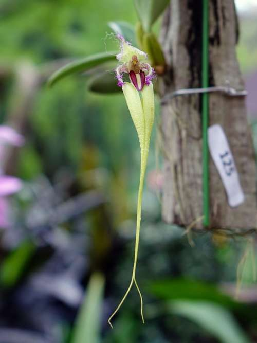 Orchid Flower Floral Bloom Branch Closeup Green