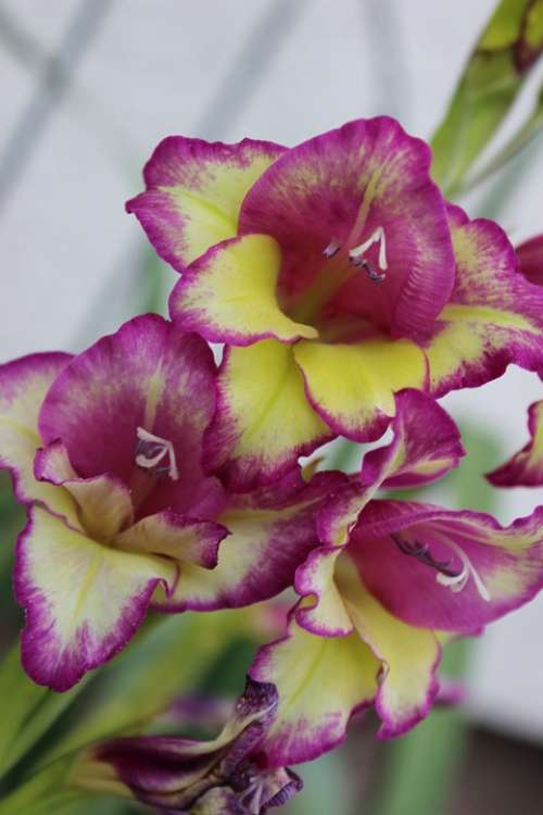Orchid Flower Purple Spring