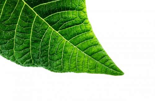 Organic Macro Green Environmental Close-Up Way