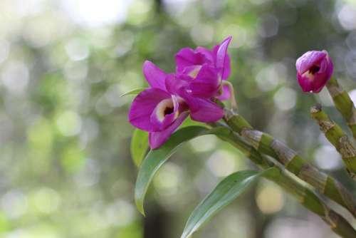 Orquidea Purple Bokeh Garden Nature Plants