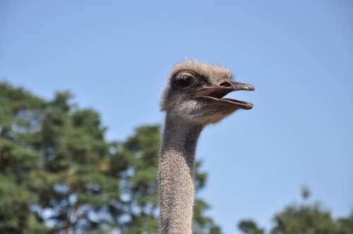 Ostrich Emu Zoo Animals Bouquet Head Bird