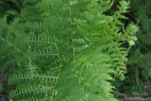 Ot Greens Picnic Nature