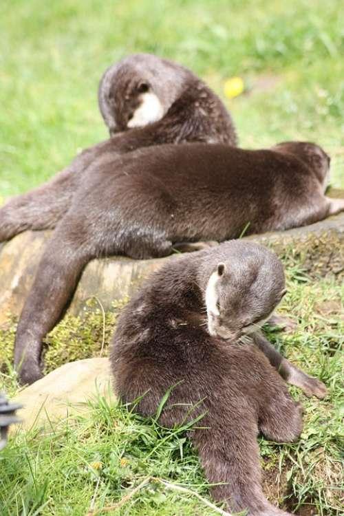 Otter Wirldpark Animals