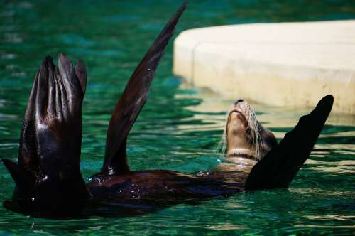 Otter Zoo Animal Funny