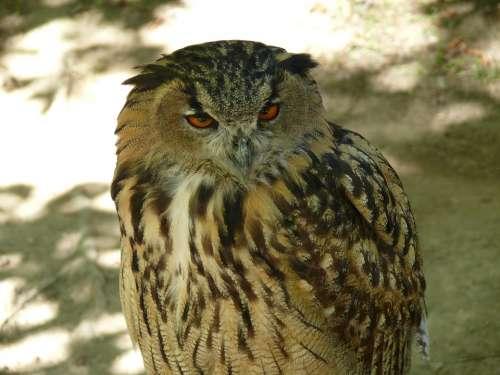 Owl Ave Bird Night Bird Of Prey Birds Of Prey