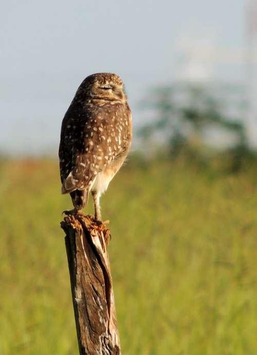 Owl Play Birds Bird Watching Bird Of Prey