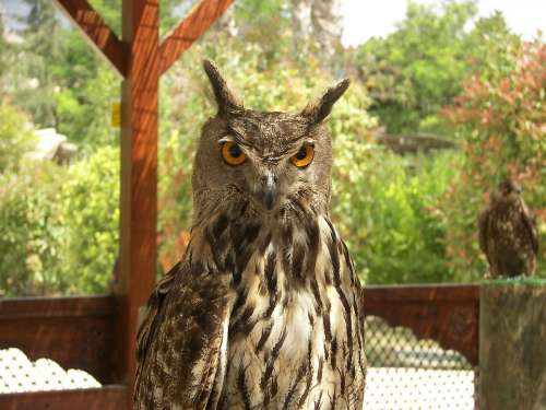 Owl Animal Zoo Bird Nature Wild