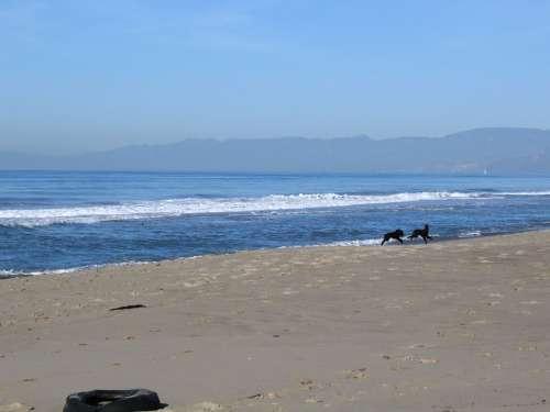 Oxnard Beach Dogs Wave Mountains Distance Ocean