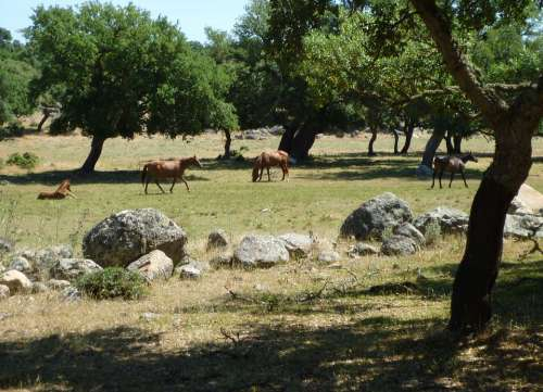 Paddock Coupling Horses