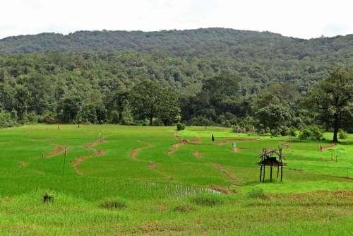 Paddy Fields Farm Watch Western Ghats Hills India
