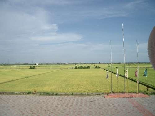 Padi Field Fields Greenery Countryside Landscape