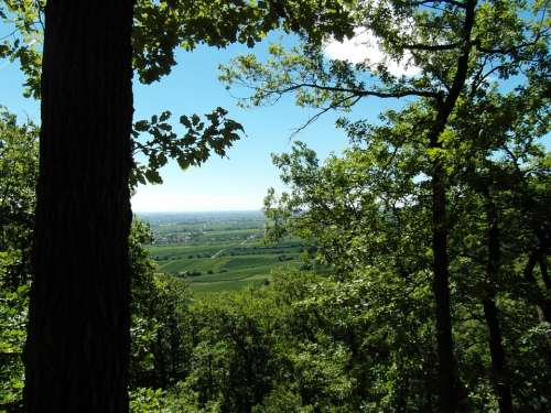 Palatine Views Hiking Palatinate