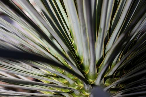 Palm Concentric Rotated Leaves Fan Shaped Biodata