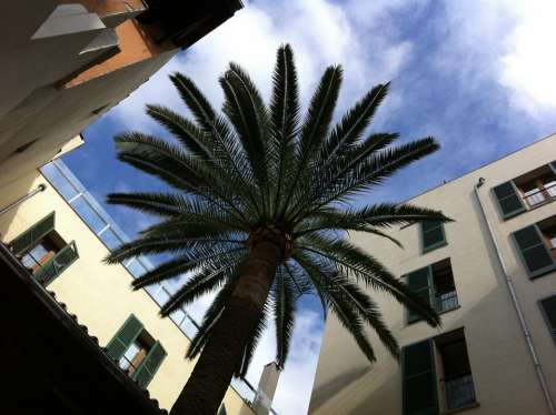 Palm Courtyard Majorca Sun