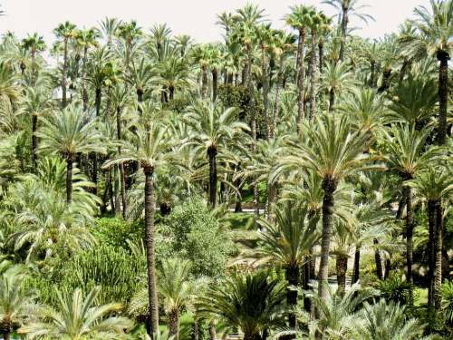 Palm Trees Tree Park Green Season Nature Forest