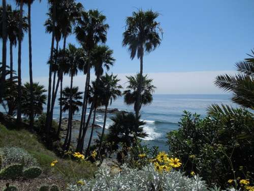 Palm Palm Trees Leaf Sea Ocean Water Palms Sky