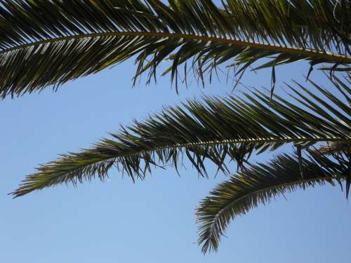 Palm Sky Palm Leaves View Outlook Vacations