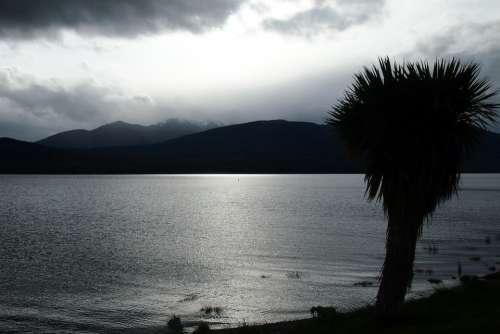 Palm Silhouette Lake Grey Light Mountain Clouds