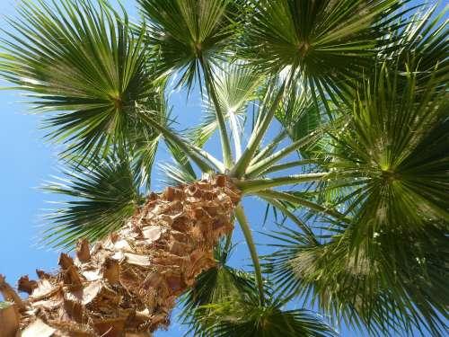 Palm Sky Nature