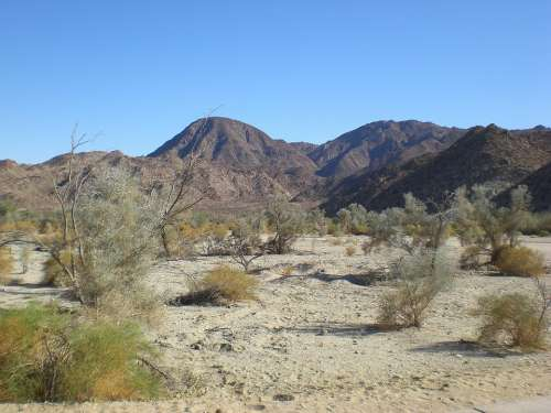 Palm Desert Rugged Sand