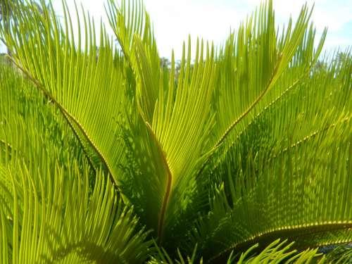 Palm Fronds Detail Close Up Structure Texture