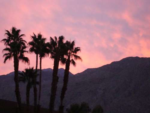Palm Springs California Mountains Palm Trees Sunset
