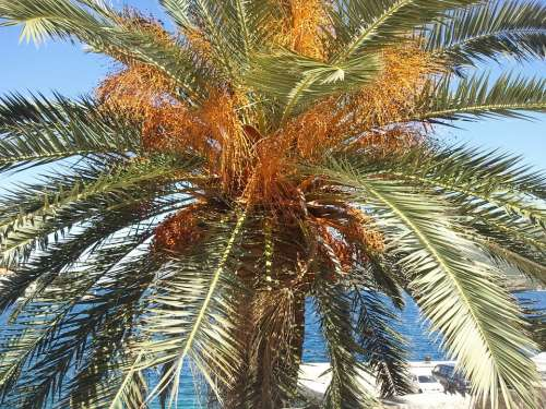 Palm Tree Beach Holiday Canary Islands