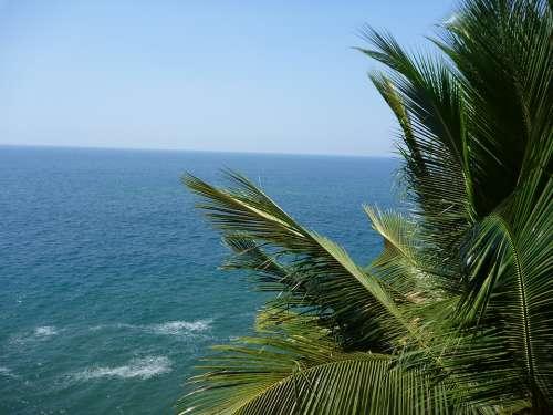 Palm Tree Sea Ocean Leaves