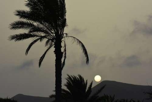 Palm Tree Sun Sunset Landscape Nature Silhouette
