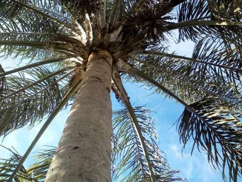 Palm Tree Sky Leaves