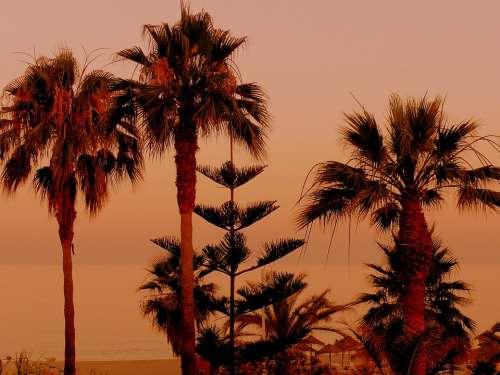 Palm Trees Sunset Sand Beach Orange Beautiful