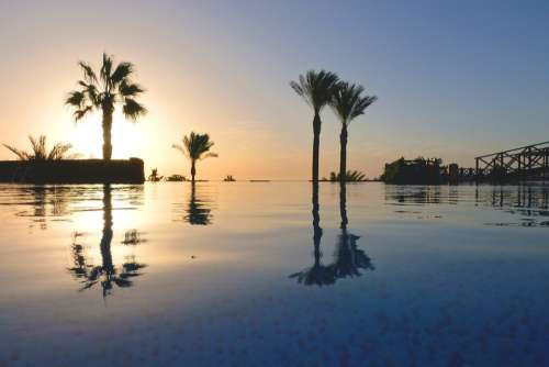 Palm Trees Pool Vacations Hotel Mood Swimming Pool