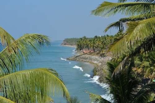 Palm Trees Palms Tropical Nature Beach Sea